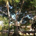 l'arbre face a notre chambre