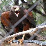 Hawk in the bird area