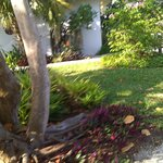 Seagrape Bed and Breakfast...front yard