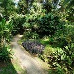Weg durch den Garten zum Bar Bereich