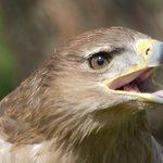 Bird of Prey Centre Newent