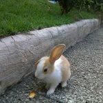 Um dos simpáticos coelhinhos que alegram a pousada