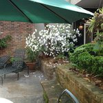 Beautiful white flower tree accenting the courtyard.