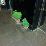 Poor plants need to make up for a lot!