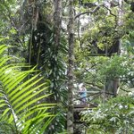 Daintree forest in the Discovery Centre