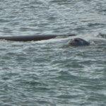 Wale vor der Haustüre