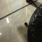 Insekten im Frühstücksraum