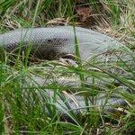 Anaconda_14