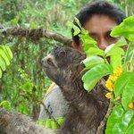Oscar_and_the_sloth