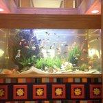 Fish tank in lobby