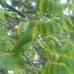 A Green Bird?
