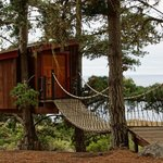The treehouse, complete with suspended walkway.
