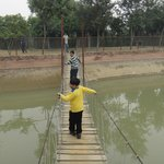 Burma Bridge at Pratap Garh Farms