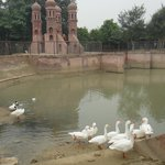 Lake with Ducks at Pratap Garh Farms