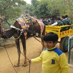 Camel Cart ride at Pratap Garh Farms