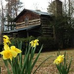SpringTime at Cabin No. 1
