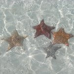 stelle nel mare