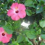 Belles fleurs partout sur le site