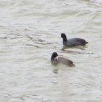 Ducks - Meridian State Park
