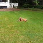 house dog at Rip Van Winkle