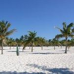 The beach at Playa Sirena....bring shade