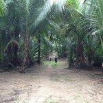Humacao Nature Preserve