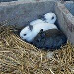 New baby bunnies.