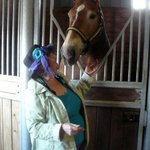 Getting to love one of the Gentle Giants, Belgian Horses
