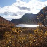Alaskan Spruce Cabins Foto