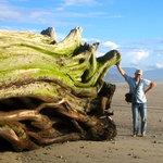 Giant Driftwood on Karamea Beach