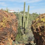 Fountain Hills Botanical Garden