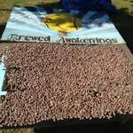 Drying out the fresh cocoa beans!