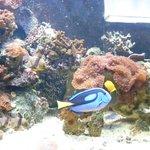 """Peces tropicales de la película de """"Nemo"""""""