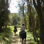 Horse Trek with Selwyn
