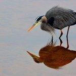 Nisqually National Wildlife Refuge Foto