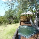 Leadwood House at the Bushcamp: Private deck and splash pool, view out to the bush!