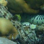Adang Sea Divers Foto