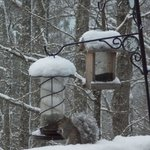 Loved the bird (squirrel) feeders