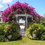 Caribbean grove