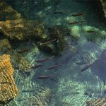 crystal clear lakes filled with cichlids and turtles