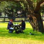 Romantic picnic. She said Yes!