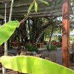 Ficus restaurant where Breakfast is held