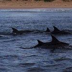 Delfine ganz nah