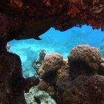 scorcio di fondale e barriera corallina
