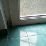 porta/finestra con insetti morti al'interno