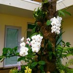 Orchids growing on palm trees in courtyard