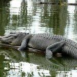 LeBlanc Swamp Tour