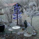 Bottle tree in Winter