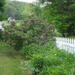 front border garden