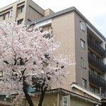 外観(隣の桜が満開)